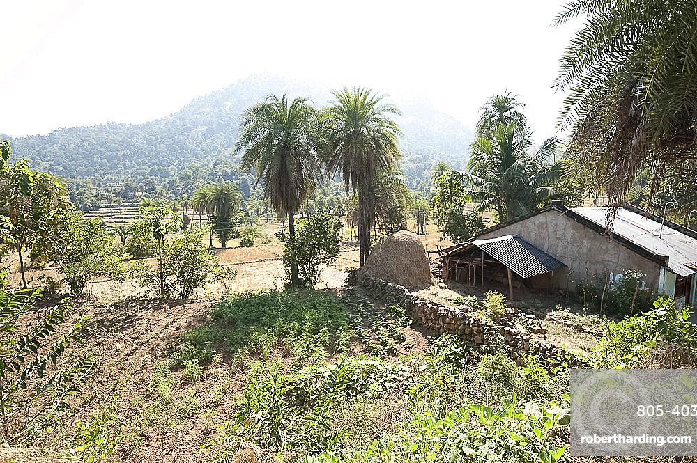 Vegetables growing in communal village plot in Saura tribal village, rural Orissa, India, Asia