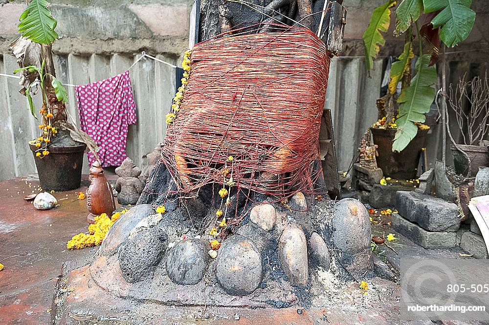 Hindu shrine around tree, decorated with marigold garlands (mala) and sacred red strings, in a Kolkata back street, West Bengal, India, Asia