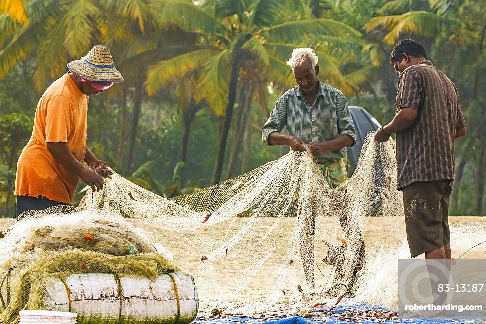 Fishermen collecting small-sized catch from gill net at popular Marari Beach, Mararikulam, Alappuzha (Alleppey), Kerala, India, Asia