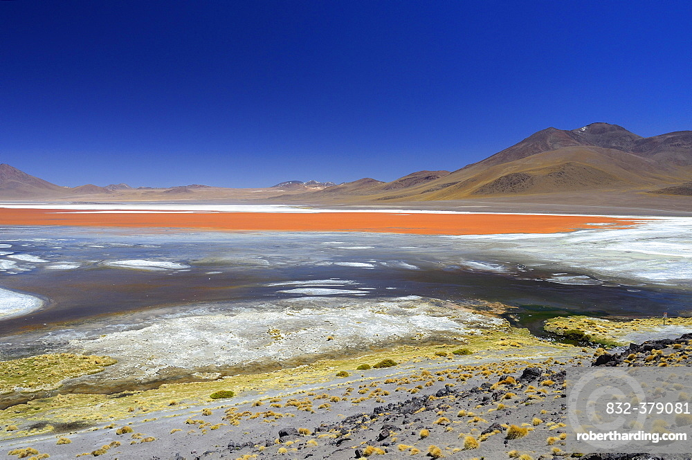 Play of colours of the Laguna Colorada, Reserva Nacional de Fauna Andina Eduardo Abaroa, Altiplano, Sur Lipez, Bolivia, South America