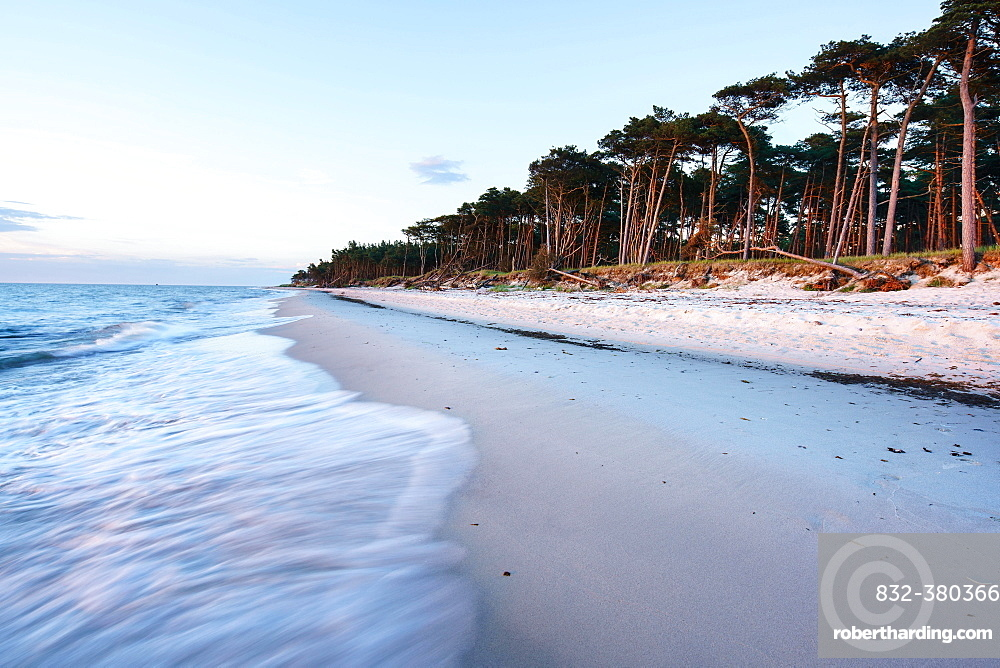 Twilight at the western beach Darß, coastal forest, wind refugees, Western Pomerania Lagoon Area National Park, Fischland-Darß-Zingst, Baltic Sea, Prerow, Mecklenburg-Western Pomerania, Germany, Europe