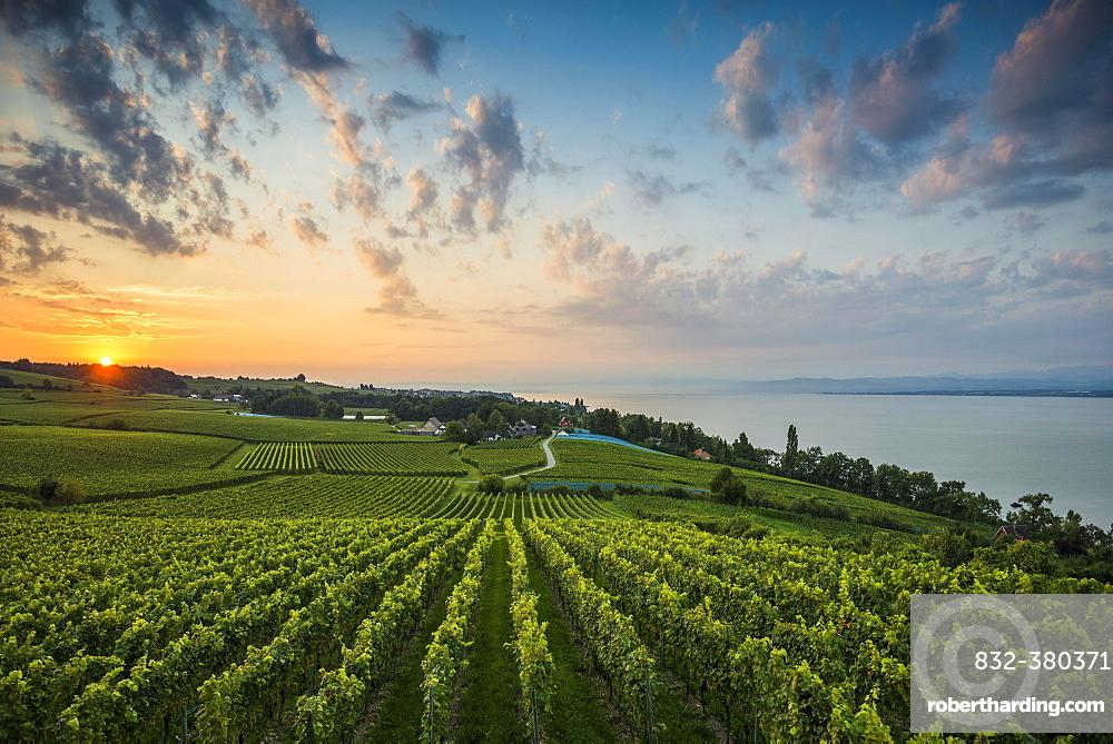Vineyards between Hagnau and Meersburg, sunrise, cloudy sky, Lake Constance, Baden-Württemberg, Germany, Europe