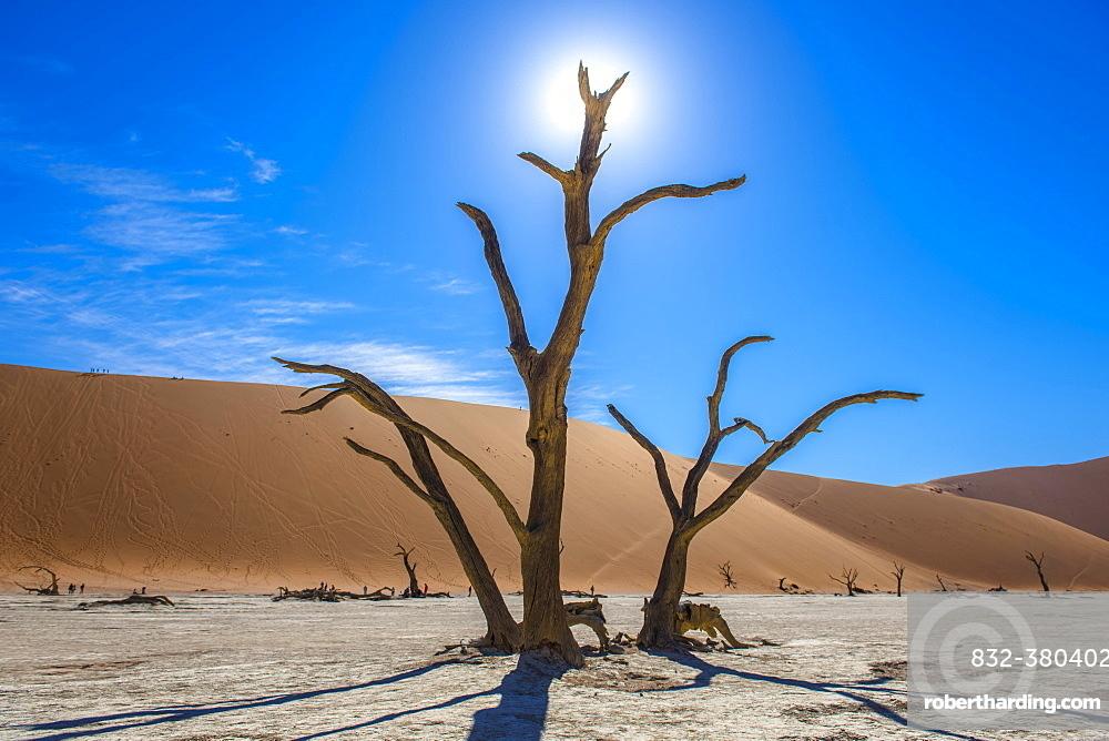 Dead camel thorns (Acacia erioloba) in front of sand dunes, Dead Vlei, Sossusvlei, Namib Desert, Namib-Naukluft National Park, Namibia, Africa