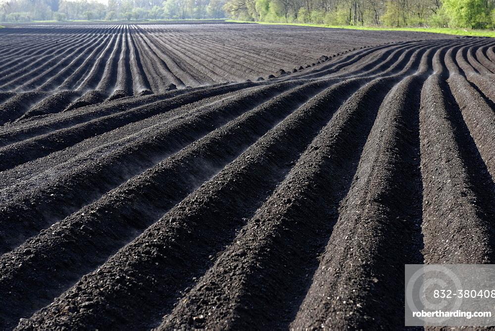 Plowed field, furrows, black earth, Upper Dinger Moos, Oberding, Upper Bavaria, Bavaria, Germany, Europe