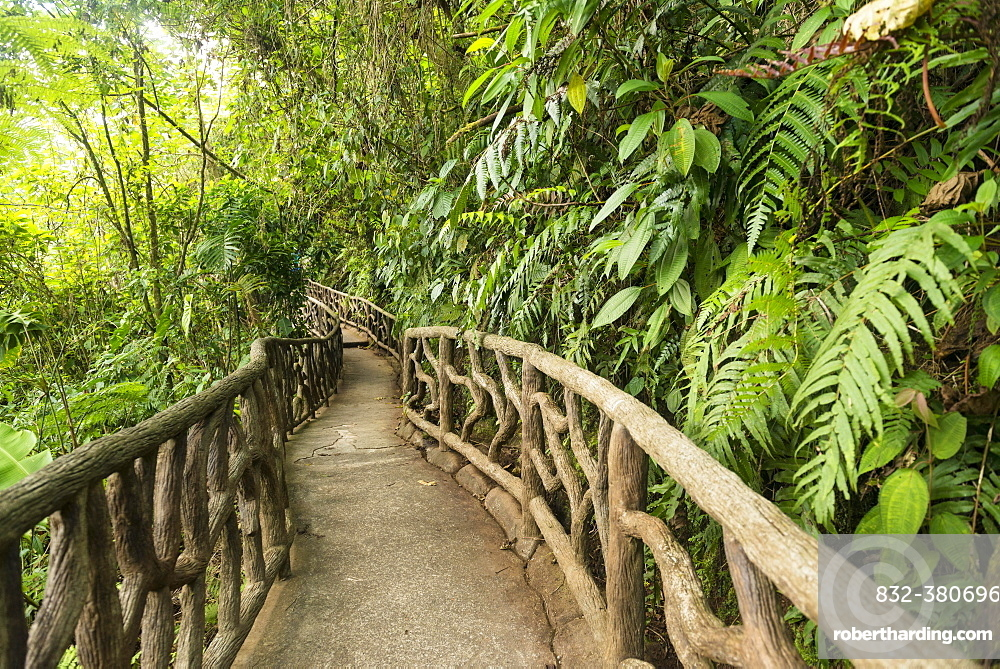 Way through dense vegetation, La Paz Waterfall Gardens, Conservation Area, Central Valley, Costa Rica, Central America