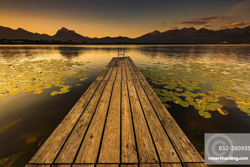 Dock at mountain lake with lily pads (Nymphaea), Allgäu Alps at back, sunrise, Hopfensee, Hopfen am See, Ostallgäu, Bavaria, Germany, Europe