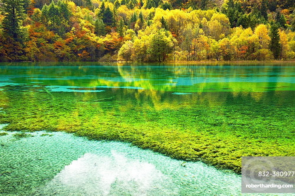 Five Flower Lake in autumnal environment, Jiuzhaigou National Park, UNESCO World Heritage Site, Sichuan Province, China, Asia