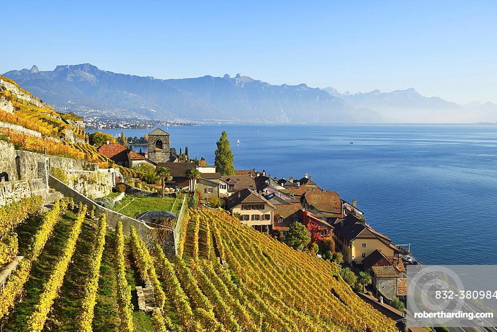 Vineyards in autumn, view of Lake Geneva and winegrowing village Saint-Saphorin, Lavaux, Canton of Vaud, Switzerland, Europe