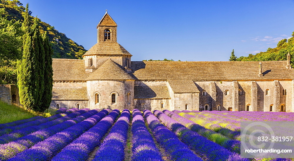The Romanesque Cistercian Abbey of Notre Dame of Senanque set amongst flowering lavender fields, near Gordes, Provence, France, Europe