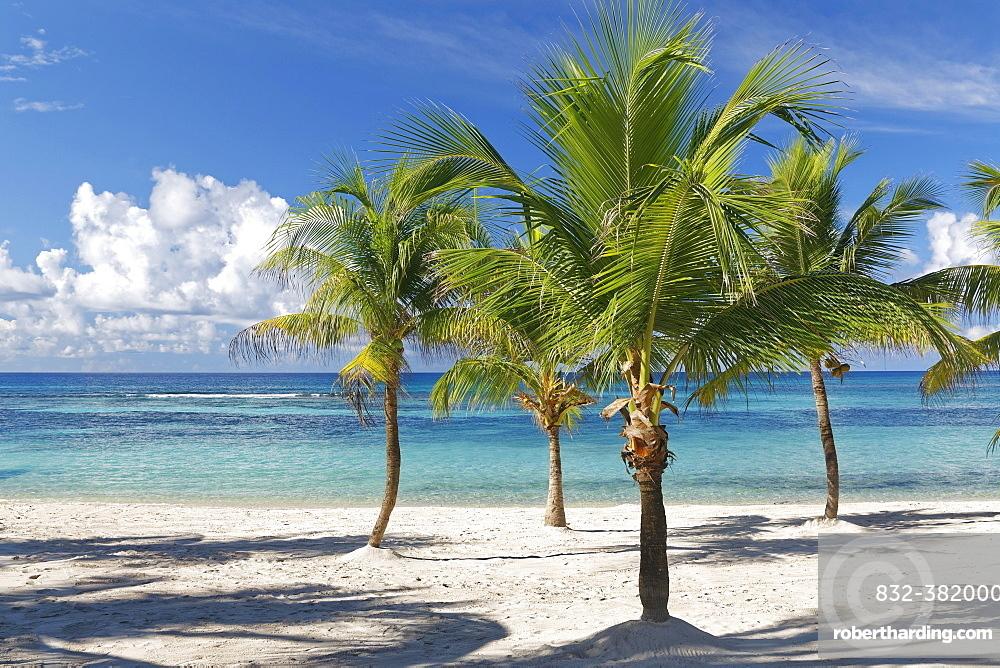 Dream beach, sandy beach with palm trees and turquoise sea, Parque Nacional del Este, Isle Saona, Caribbean, Dominican Republic, Central America
