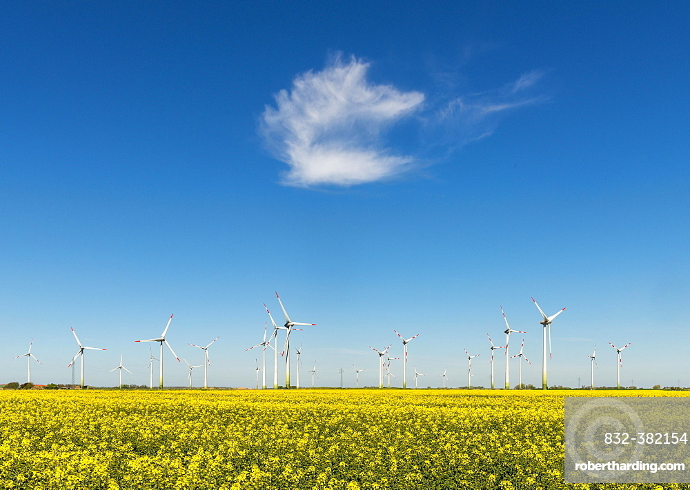Wind turbines in rape fields in front of blue sky, Norderwoehrden, Schleswig-Holstein, Germany, Europe