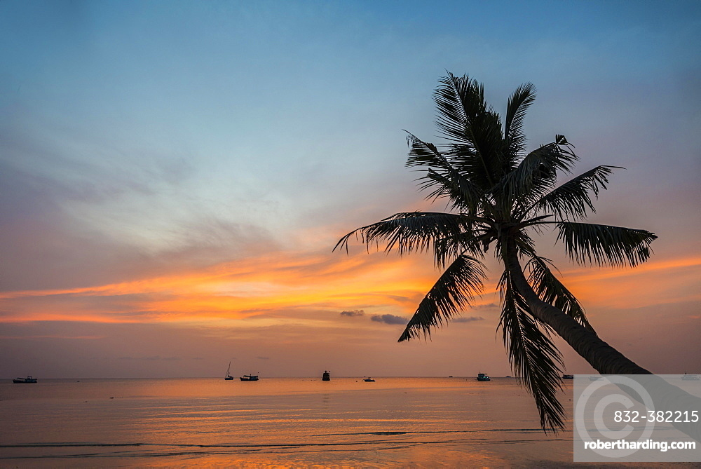 Palm tree at sunset, by the sea, South China Sea, Gulf of Thailand, Koh Tao, Thailand, Asia