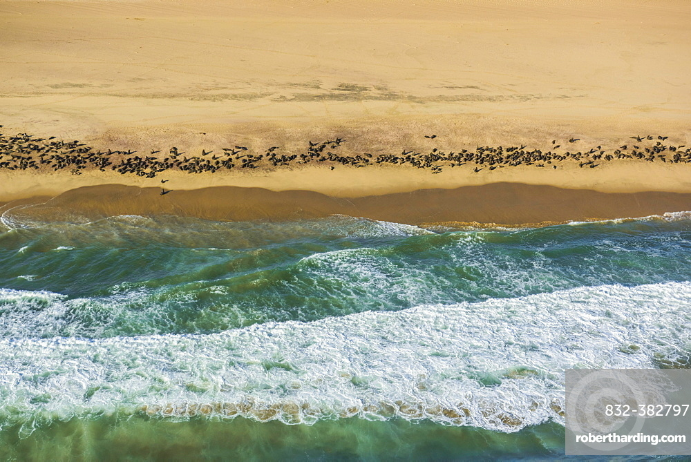 Aerial view, Seal colony on the Atlantic coast of the Namib Desert, Erongo region, Namibia, Africa