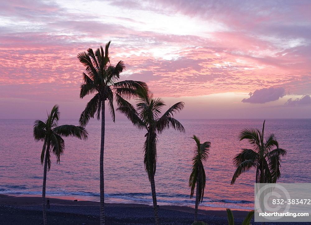 Palm trees by the sea at dusk, Puerto Naos, La Palma, Canary Islands, Spain, Europe