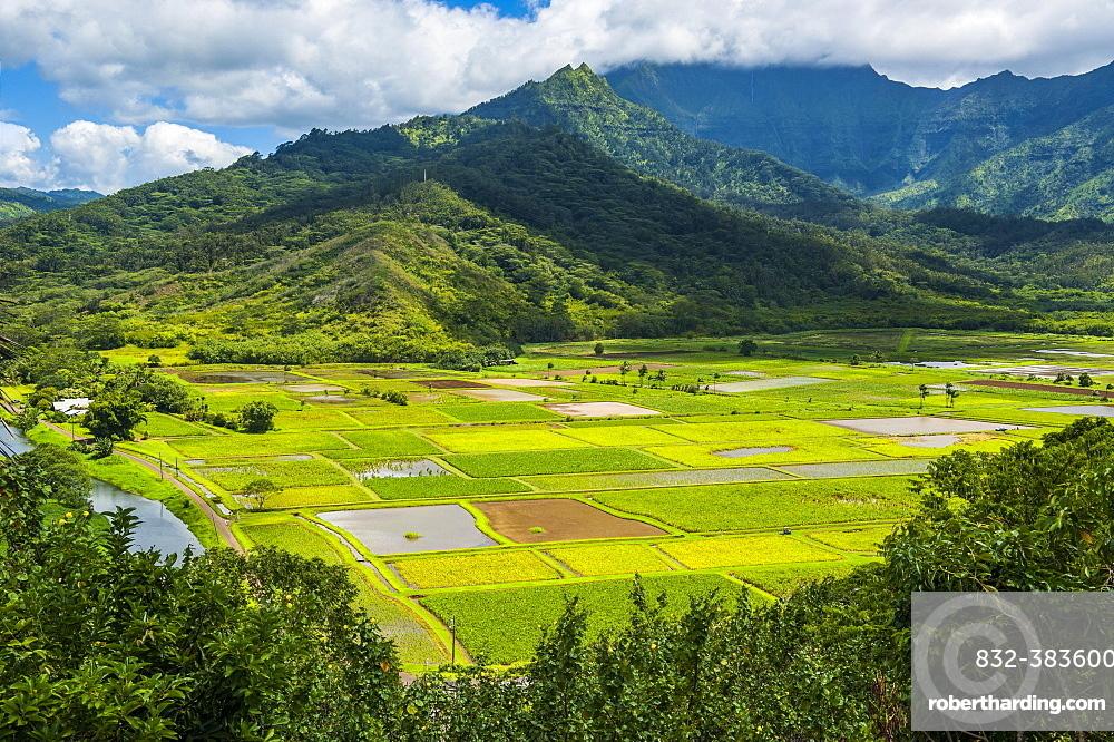 Taro fields near Hanalei on the island of Kauai, Hawaii, USA, North America