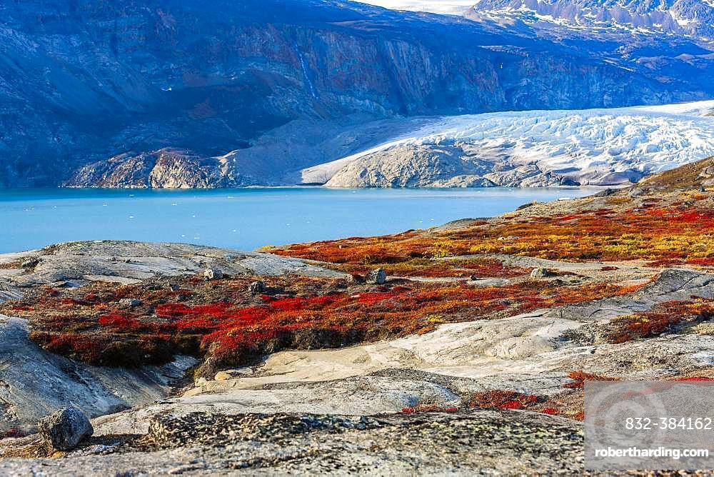 Colourful overgrown rocks in front of glacier tongue, autumn landscape, Scoresbysund, East Greenland, Greenland, North America