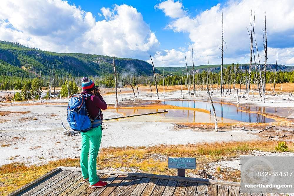 Young woman photographed, dead trees at Opalescent Pool with mineral deposits, Black Sand Basin, Yellowstone National Park, Wyoming, USA, North America