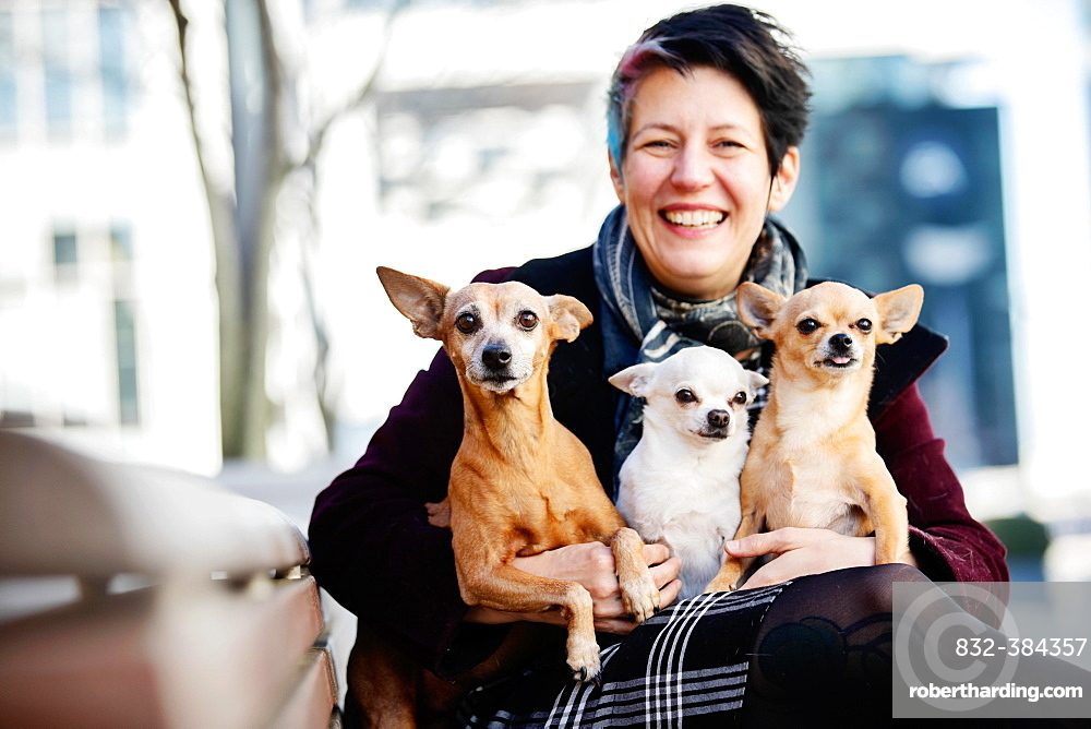 Laughing woman with three dogs on her lap, a Miniature Pinscher and two Chiuhahuas, North Rhine-Westphalia, Germany, Europe