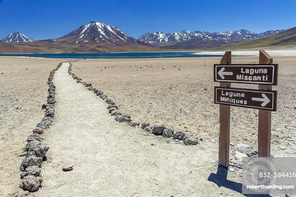 Guide to the lagoon, Laguna Miscanti with Volcano Chiliques and Cerro Miscanti, Altiplano, Region de Antofagasta, Chile, South America