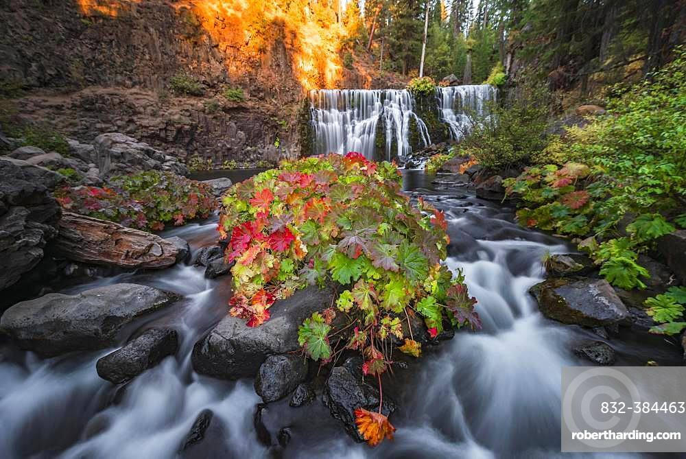 Middle Falls, Fall Waterfall, McCloud River, Siskiyou County, California, USA, North America