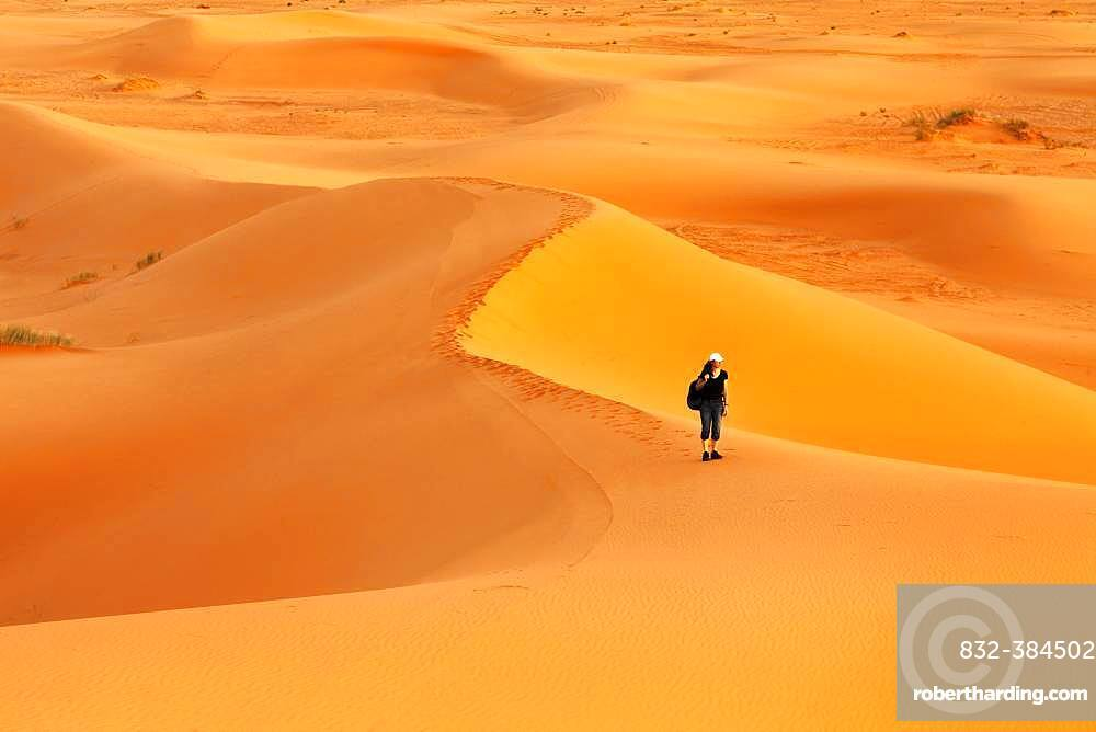 Female hiker in the desert Erg Chebbi at sunset, sand dunes, southern Morocco, Morocco, Africa