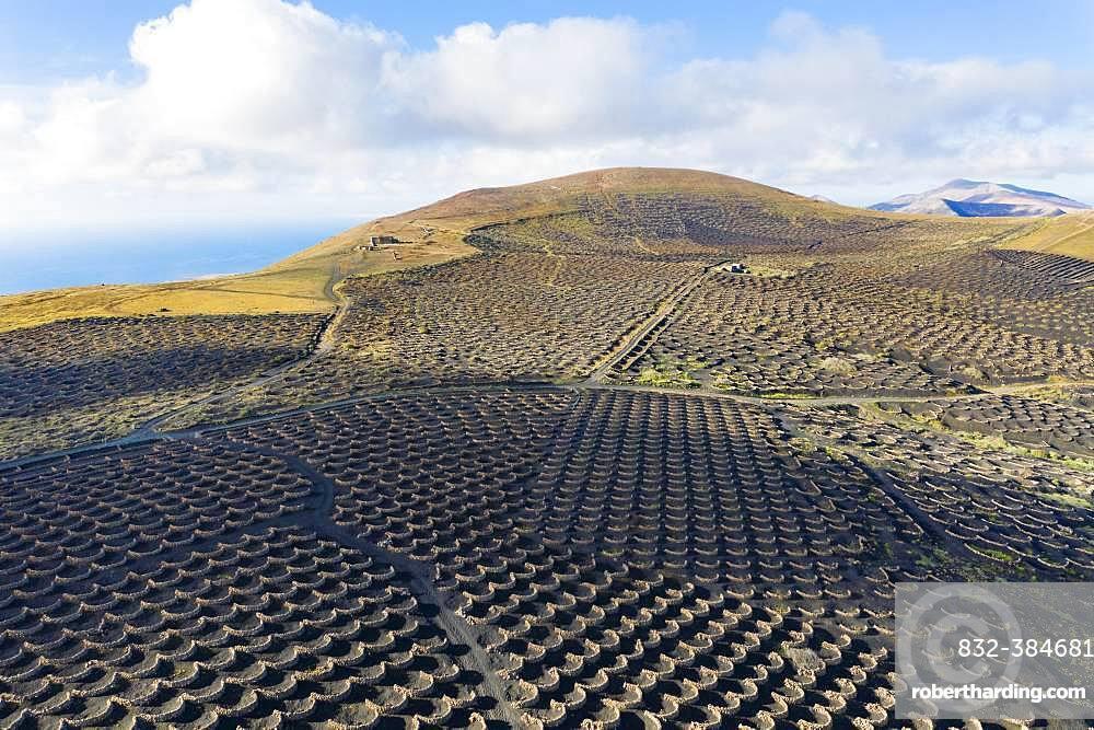 Vineyard La Geria, mountain Tinasoria, near Yaiza, drone shot, Lanzarote, Canary Islands, Spain, Europe