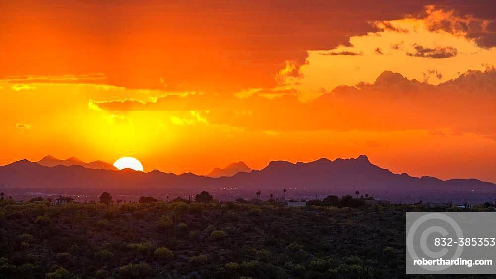 Sonora Desert at sunset, Saguaro National Park, Tucson, Arizona, USA, North America