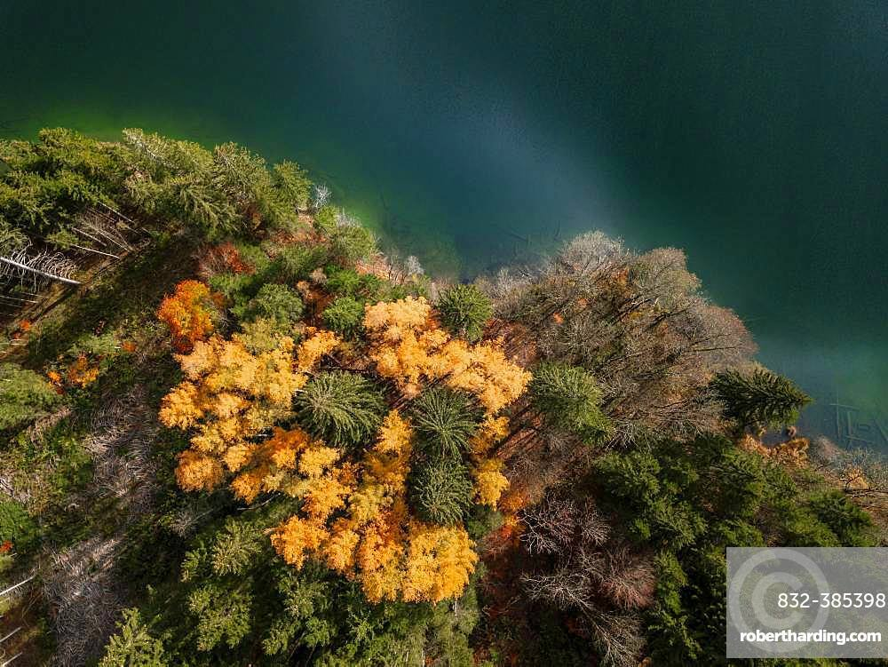 Drone shot, bird's eye view, mixed forest with yellow leaves in autumn from above, Lake Barmsee, Mittenwald, Bavaria, Germany, Europe