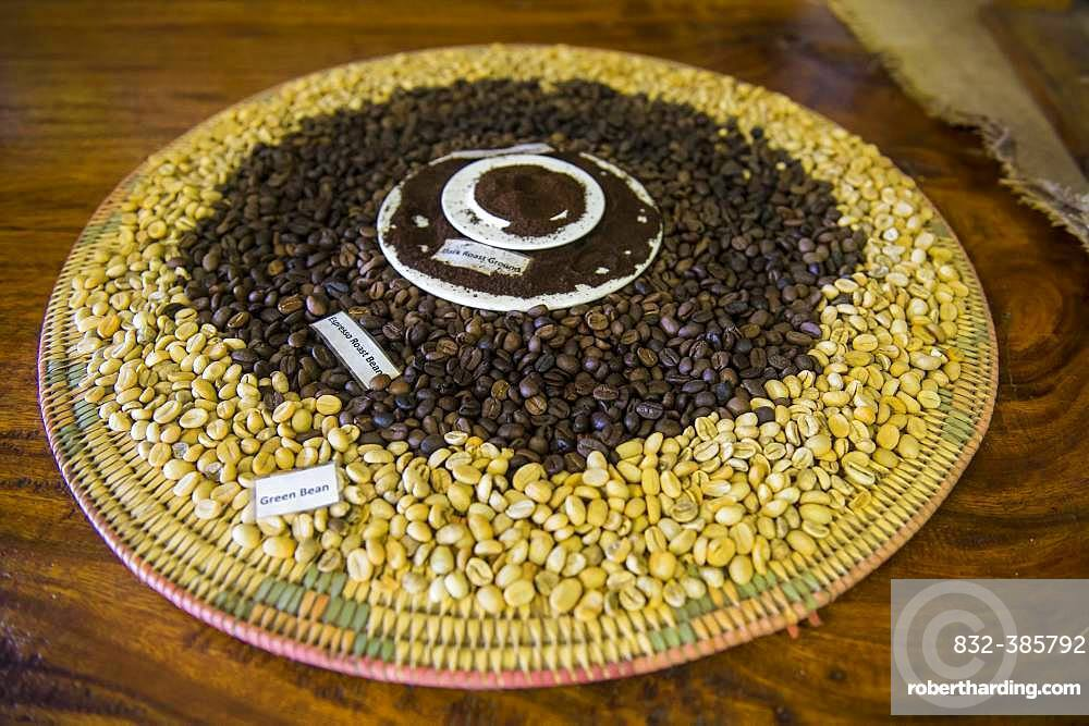 Green and roasted fresh coffee beans, Tanna coffee factory, Port Vila, Vanuatu, Oceania