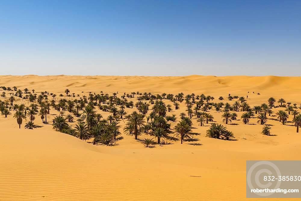 Palm grove in the sanddunes, near Timimoun, western Algeria, Algeria, Africa