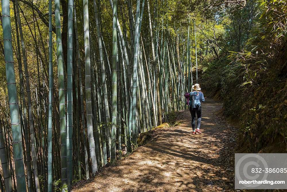 Female hiker on her way through high bamboo forest, Nakasendo Street, Kiso Valley, Japan, Asia