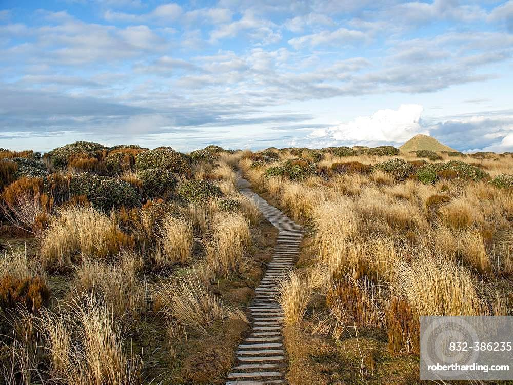 Hiking trail through grass landscape, Pouakai Circuit, Egmont National Park, Taranaki, North Island, New Zealand, Oceania