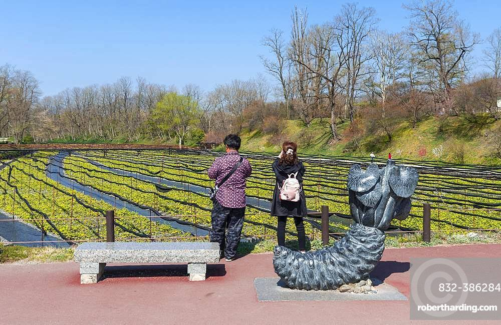 Tourists stand in front of field, Wasabi cultivation, Daio Wasabi Farm, Nagano, Japan, Asia
