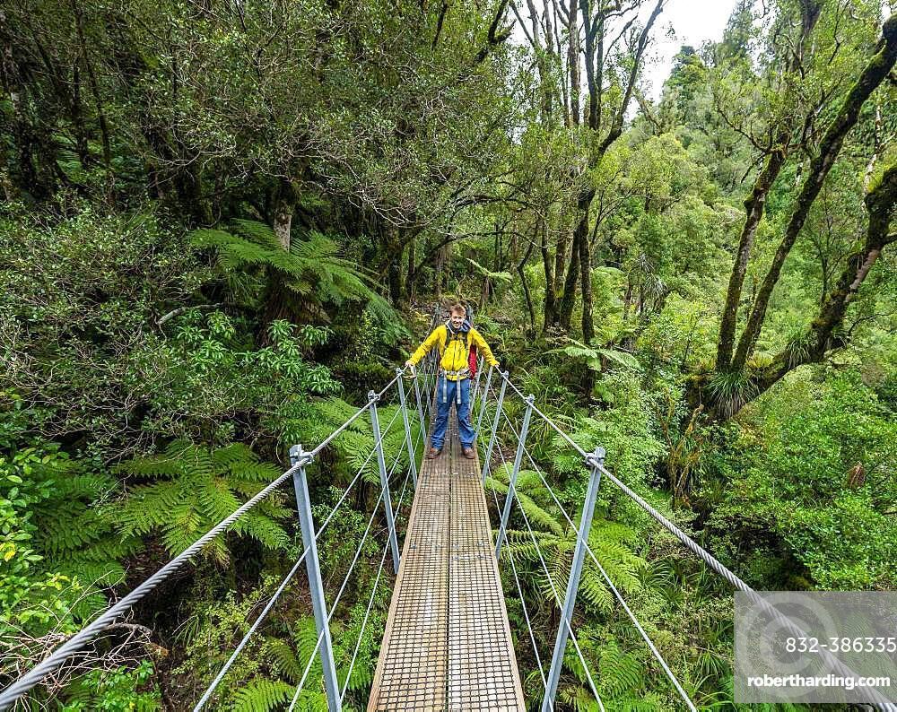 Hiker on suspension bridge in forest, Pouakai Circuit, Egmont National Park, Taranaki, North Island, New Zealand, Oceania