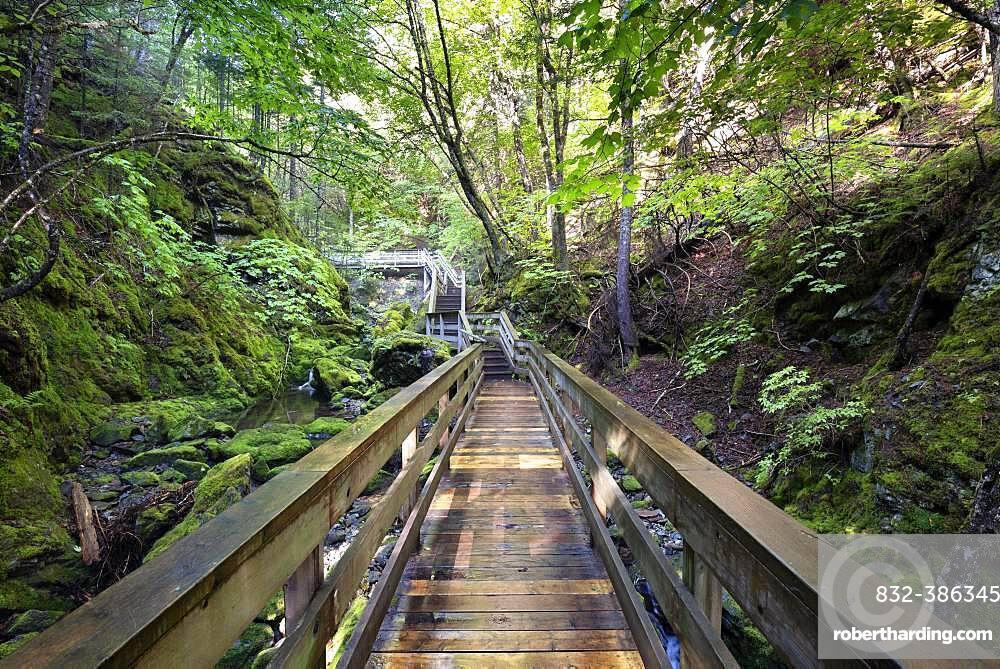 Hiking trail, wooden footbridge leads through a gorge, Fundy National Park, near Alma, New Brunswick, Canada, North America