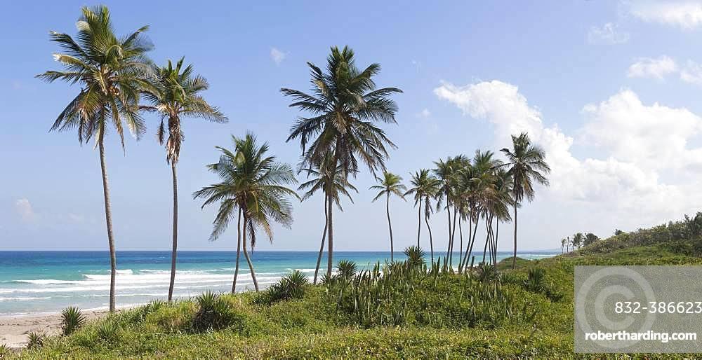 Playas de Este, palm trees, beach sea, Havana, Cuba, Central America