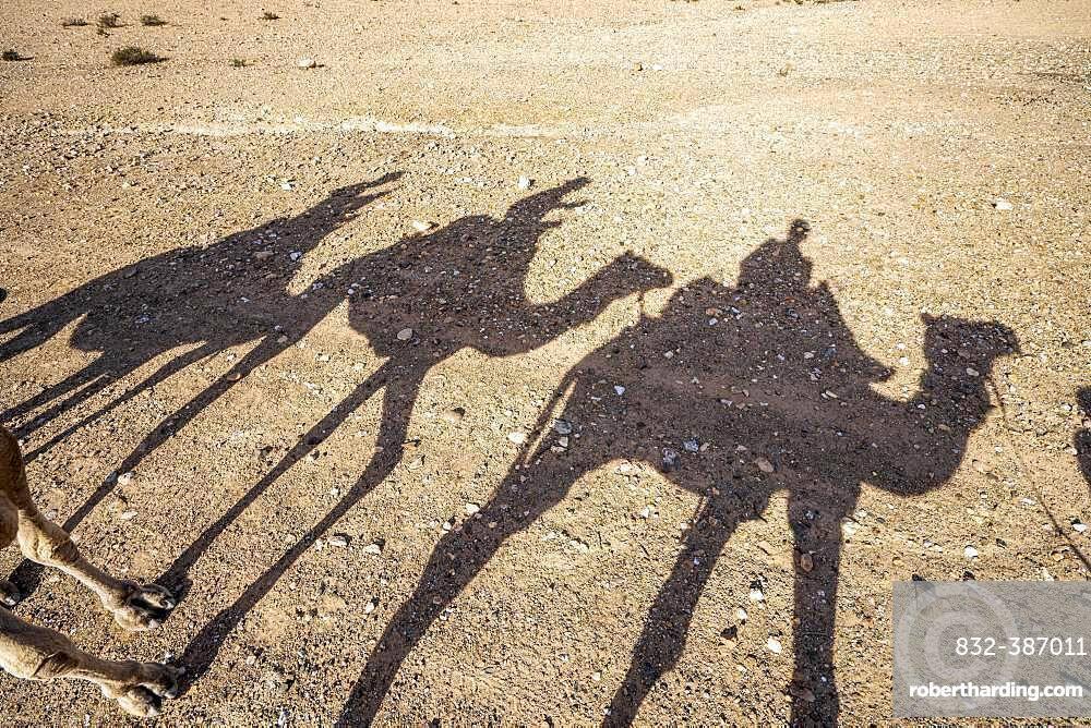 Shadows of dromedaries (Camelus dromedarius) caravan on the desert Agafay, Marrakech, Morocco, Africa