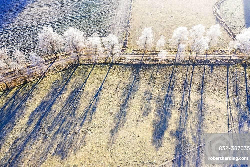 Field path through birch avenue with hoarfrost, Schwaigwall, near Geretsried, drone shot, Upper Bavaria, Bavaria, Germany, Europe