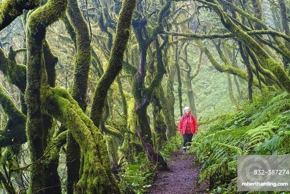 Woman hiking on forest path in cloud forest, Garajonay National Park, La Gomera, Canary Islands, Spain, Europe
