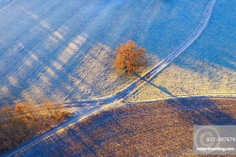 Field paths and oak with hoarfrost in morning light, near Icking, drone shot, Upper Bavaria, Bavaria, Germany, Europe