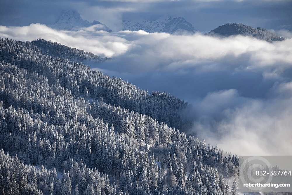 Snow-covered forest and mountains between clouds, high fog, Hochbrixen, Brixen im Thale, Tyrol, Austria, Europe