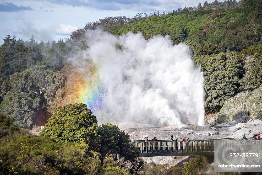 Tourists on bridge, view of erupting Pohutu Geyser with rainbow, Te Puia, Whakarewarewa, Rotorua, Bay of Plenty, New Zealand, Oceania