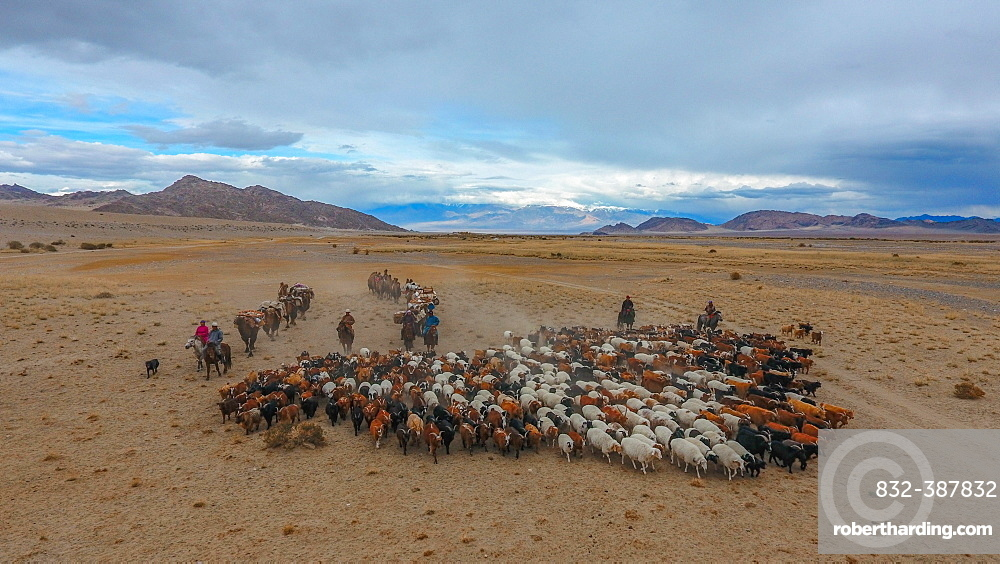 Mongolian nomads roaming the steppe with a flock of sheep, Khovd Province, Mongolia, Asia