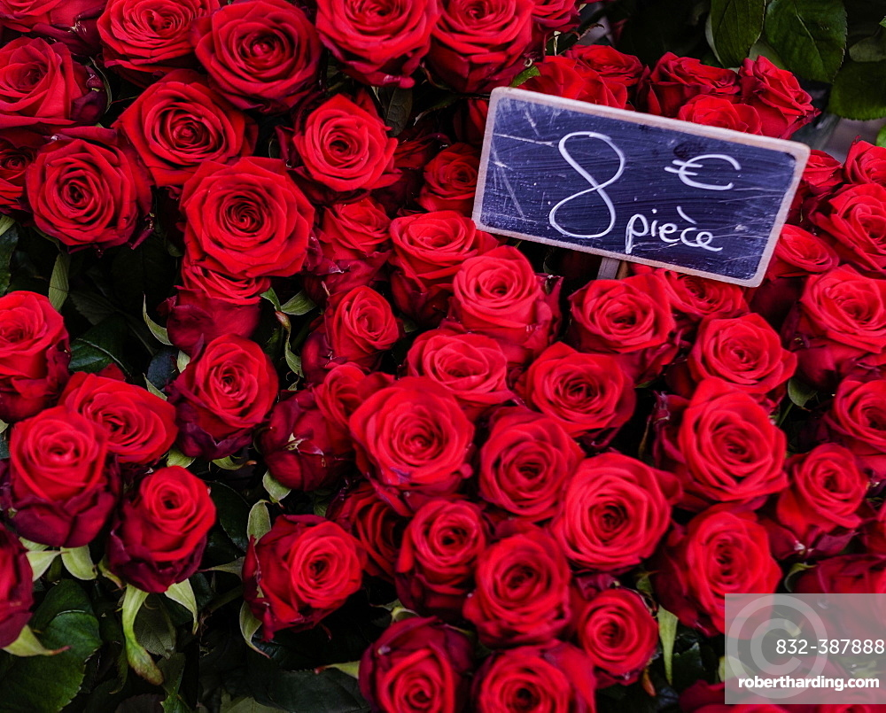 Red roses with price list on Valentine's Day, on offer in florist, Paris, France, Europe