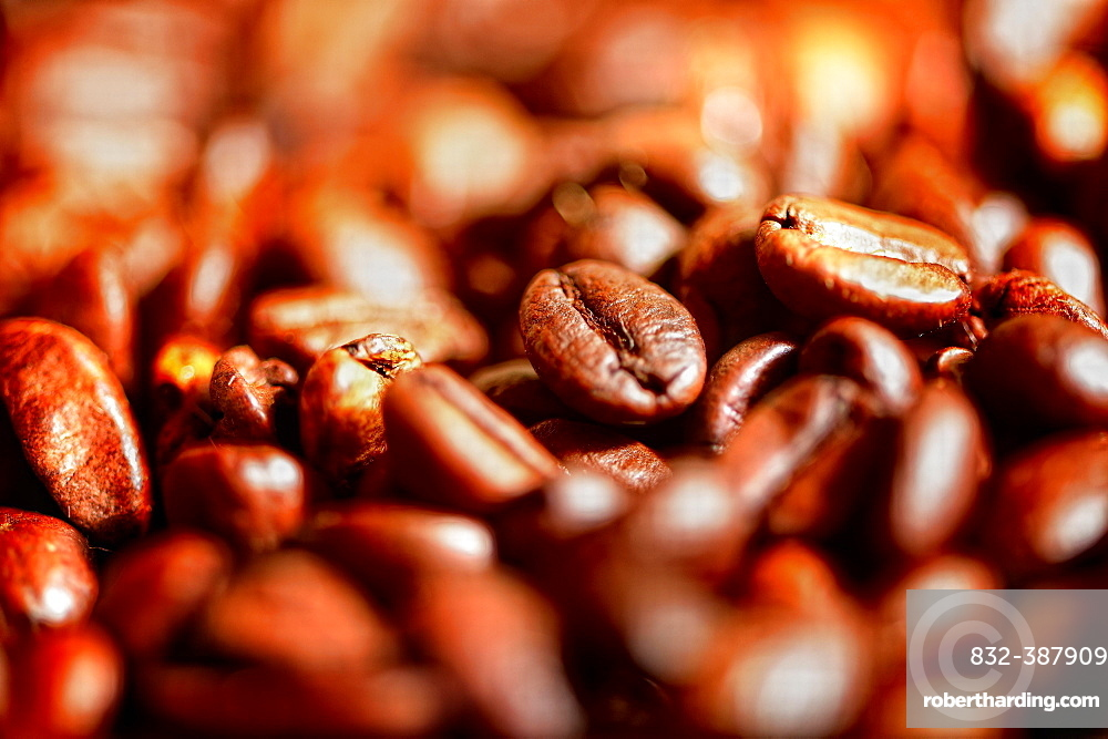 Roasted coffee beans, studio shot, Germany, Europe