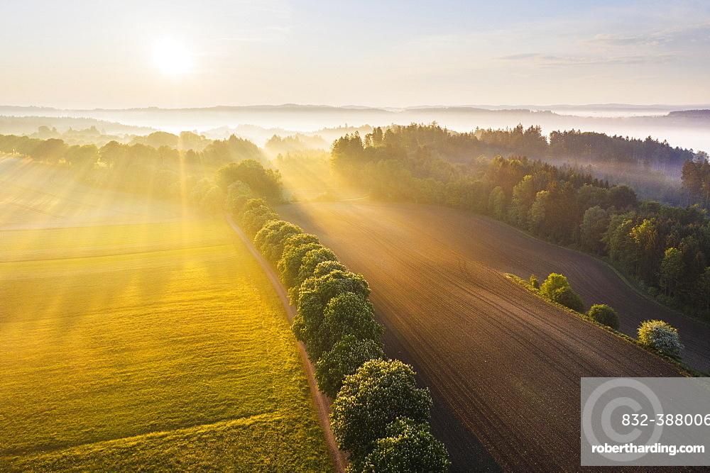 Cultural landscape with fog in morning light, near Icking, Toelzer Land, drone shot, Upper Bavaria, Bavaria, Germany, Europe