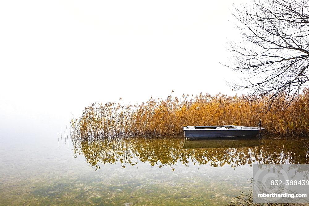 Fishing boat at the reed belt in morning fog, Irrsee, Salzkammergut, Upper Austria, Austria, Europe