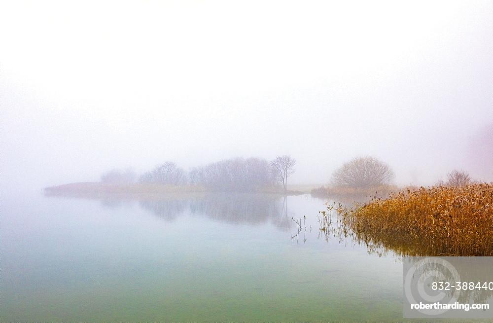 Morning fog on the banks of the Irrsees, Irrsee, Salzkammergut, Upper Austria, Austria, Europe