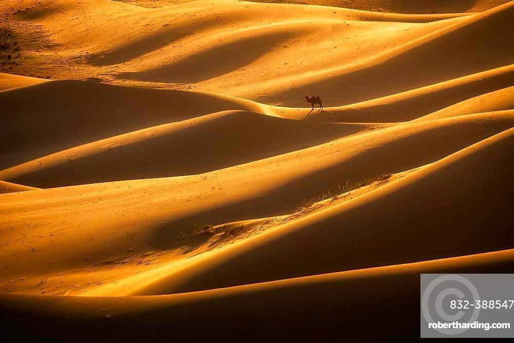 Beautiful light in Khongor sand dunes. Umnugobi province, Mongolia, Asia