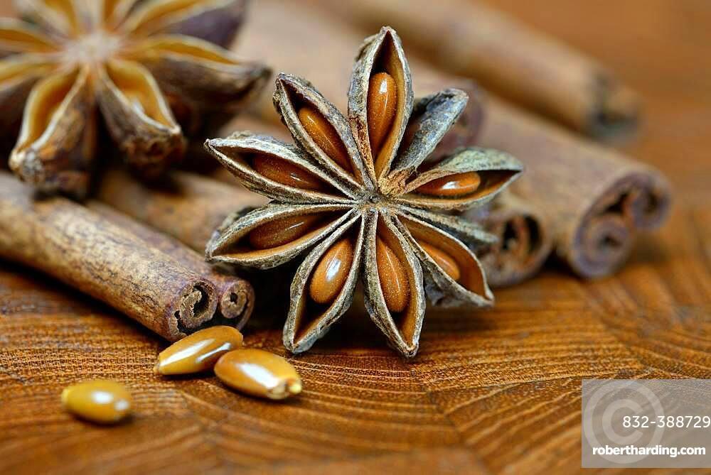 01_ (Illicium verum), fruit and cinnamon sticks, Germany, Europe